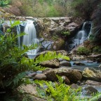 Walk to Hall's Falls, NW Tasmania