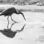 GASP – a stroll along the shoreline