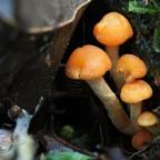 Stacking focus on fungi