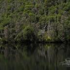 Platypus Tarn, Mt Field