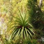 Prehistoric Pandani forest