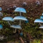 Mushroom Magic – editing tips