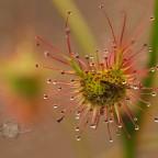 Bug eating plant …